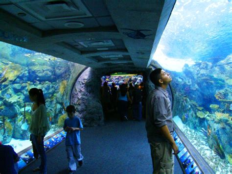 los angeles 411 enjoy the day at the aquarium of the pacific in california