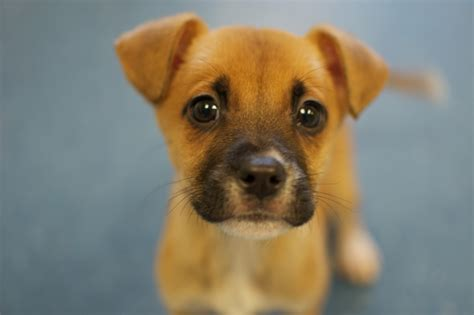 Boxer Mix  Ee  Puppies Ee   Boxer Mix  Ee  Puppies Ee   There Are  Of