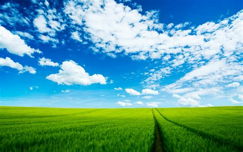 Wheat Green Fields High Definition Wallpapers