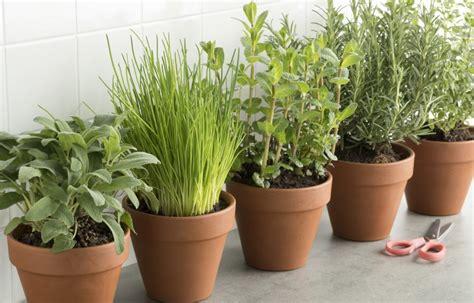 kräuter richtig pflanzen den eigenen kr 228 utergarten anlegen in der k 252 che