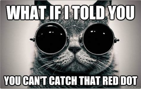 Morpheus Cat Meme - morpheus cat welcome to the litter box of the real