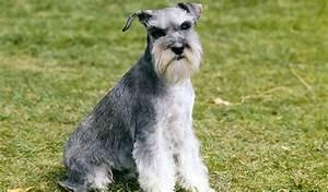 list of hypoallergenic dog breeds