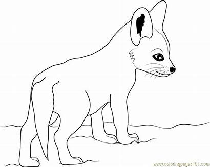 Fox Coloring Pages Drawing Pdf Printable Template
