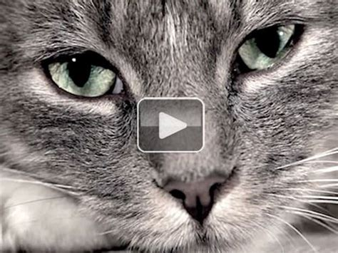 sad cat diaries video  funniest