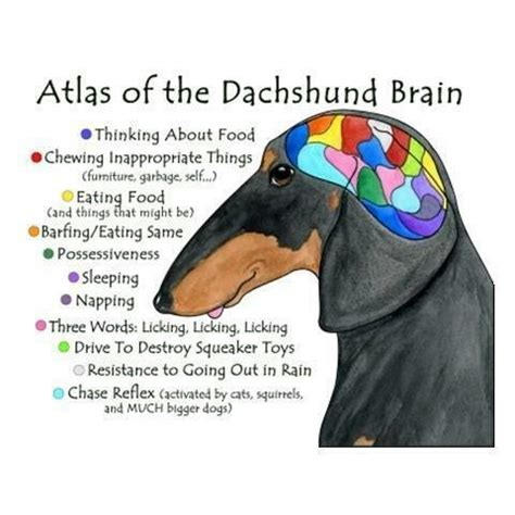 Dachshund Birthday Meme - dachshund memes liz rio