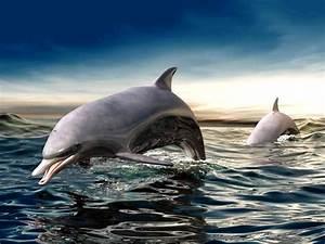 Free 3D Dolphin Wallpaper - WallpaperSafari