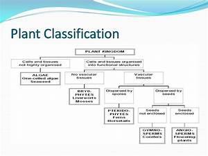 Plant Diversity Flow Chart