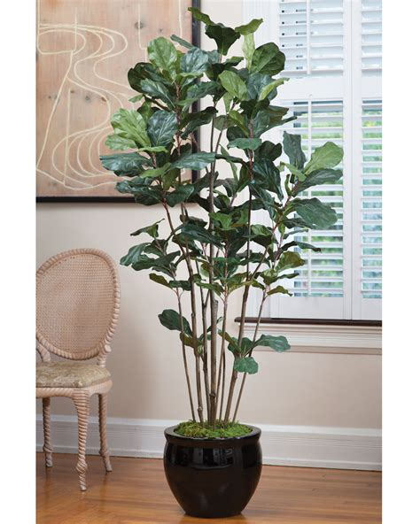 Affordably Priced 6' Fiddle Leaf Fig Silk Tree At Petals