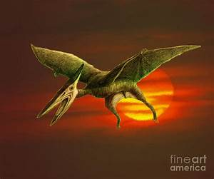 Pterodactyl Photograph by Spencer Sutton