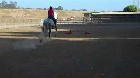 jumping andalusian horse