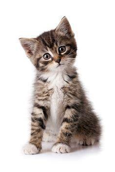 1000 id 233 es sur le th 232 me odeurs d urine de chat sur urine de chat odeurs d urine et