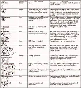 Guide To Assessment Of Cranial Nerves