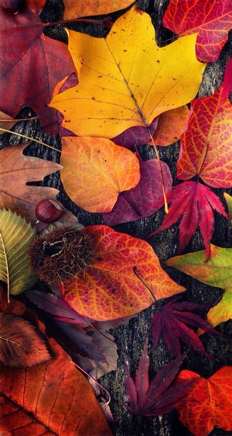 Autumn Season Wallpapers For Phone by Fall Iphone Wallpaper Fondos Iphone Wallpaper Fall