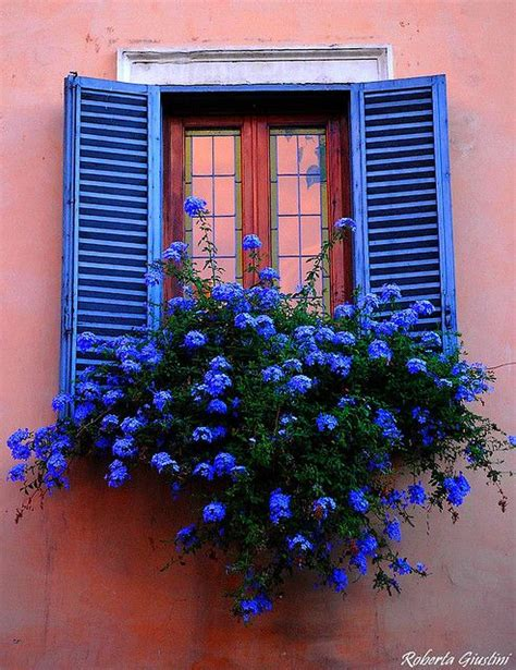 beautiful window box planter ideas