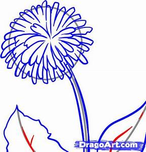 How to Draw a Dandelion, Step by Step, Flowers, Pop ...