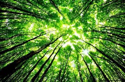 Forest Sunny Backgrounds Vild Digitale Natur Det