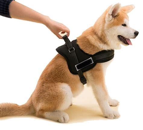 canapé pour grand chien classement comparatif top harnais pour chien en avr 2018