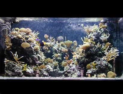 Tank Aquarium Reef Coral Aquariums Marine Gallon