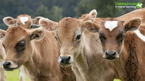 farm animals wallpaper wallpapertag