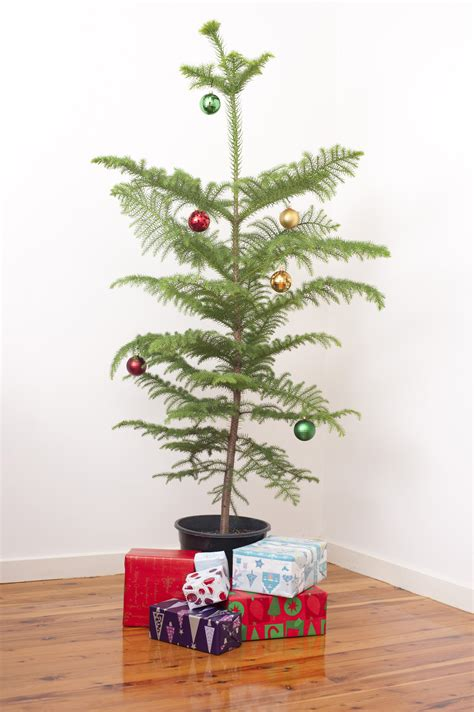photo  simple christmas  christmas images