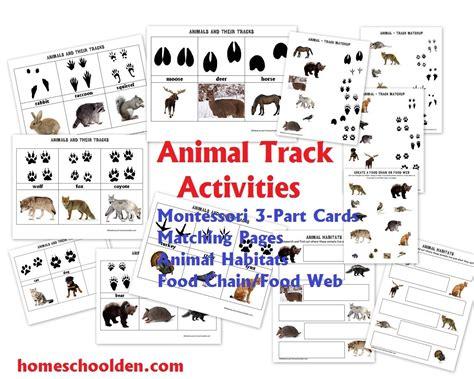 nocturnal diurnal animals   part montessori cards