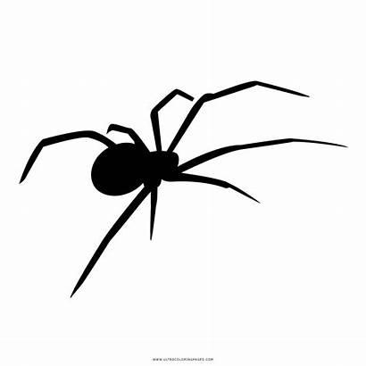 Coloring Spider Aranha Desenho Widow Drawing Colorir