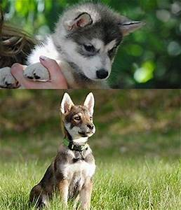 37 best images about Dogs on Pinterest | Wolfdog, Your dog ...