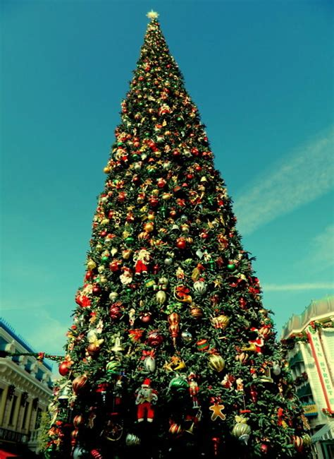 Big Beautiful Christmas Tree On Main Street Pictures