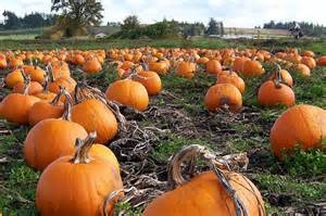 Hondo Pumpkin Patch by Gallery Images Of Fall Pumpkins