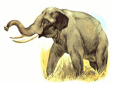 elephant animalseelephantelephantpnghtml
