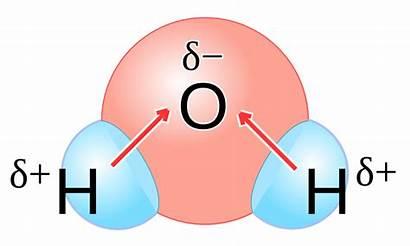 Polarity H2o Explain Svg Bond Molecular Determine
