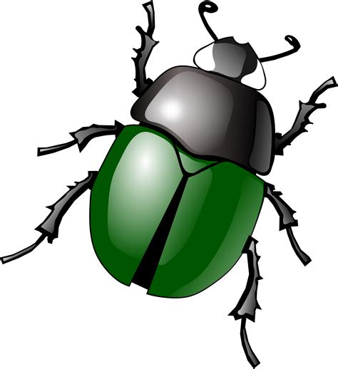 Insect Clipart Bugs Png Images Free Pictures Bug Png