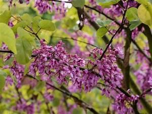 Mediterrane Pflanzen Winterhart : 205 besten mediterrane pflanzen bilder auf pinterest ~ Frokenaadalensverden.com Haus und Dekorationen