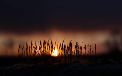 morning sun rise hd desktop wallpapers  hd