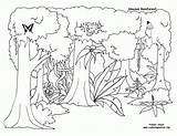 Coloring Trees Forest Rain Rainforest Canopy Template Clipart Plants Drawing Sketch Library Popular sketch template