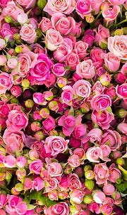 Cool iPhone Floral Backgrounds & Wallpapers | Pinofy.Net ...