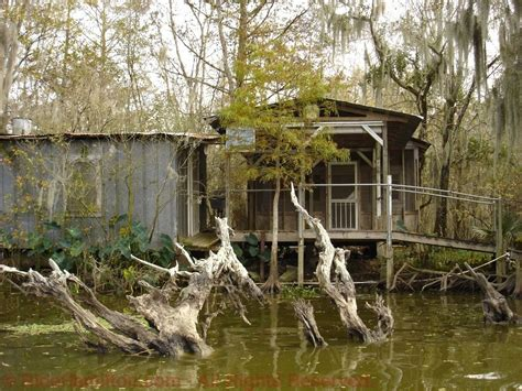 Louisiana Home Bayou by Sw Houses For Sale Dead Cypress Tree Remains Where