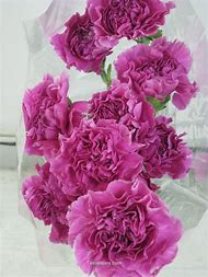 Hot Pink and Purple Flowers