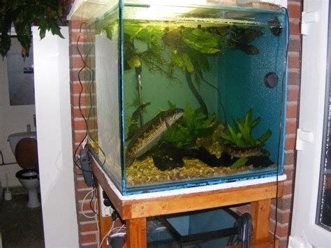 fish tank decorations cheap best 25 cheap fish tanks ideas on tank stand