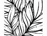 Tropical Coloring Leaves Plants Flowers Printable Print sketch template