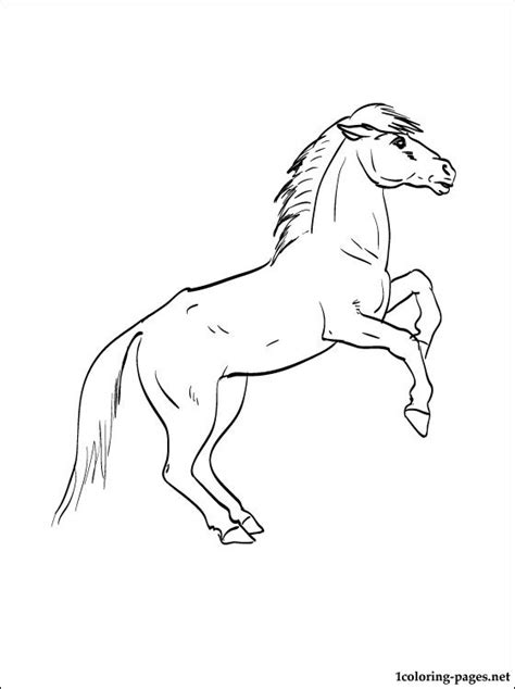 Przewalski's Horse Coloring Page  Coloring Pages