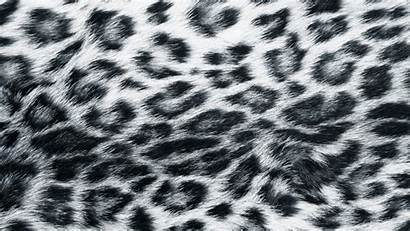 Leopard Animal Backgrounds Wallpapers Pixelstalk
