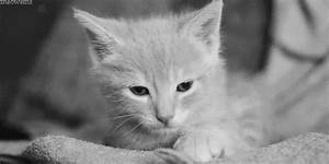 Sleepy Black And White GIF - Find & Share on GIPHY