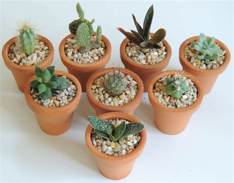 maceta de barro 5cm cactus plantas suculentas miniatura