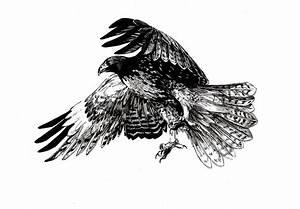 Red-Tailed Hawk by graikfaik on DeviantArt