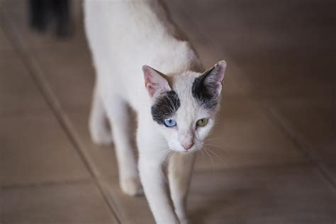 different colored why do some cats different colored