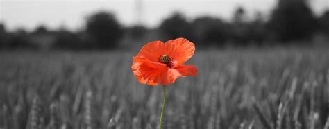 remberance poppy the story of the poppy the royal british legion