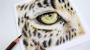 How To Draw A Realistic Leopard Eye Colored Pencil