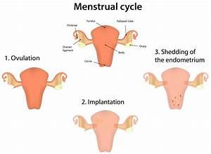 Natural Menstrual Cramp Remedies  Severe Menstrual Cramp