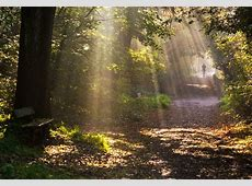 Hampstead Heath – The Heath & Hampstead Society